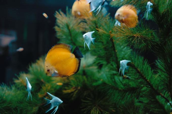 Exotic fish swimming underwater